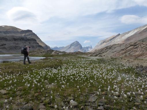 Along the Brazeau River,Jasper National Park