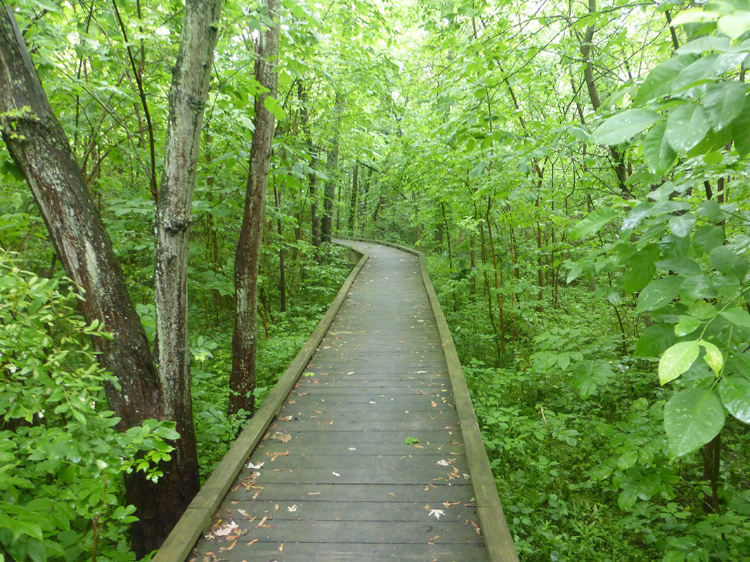 Boardwalk on the Appalachian Trail