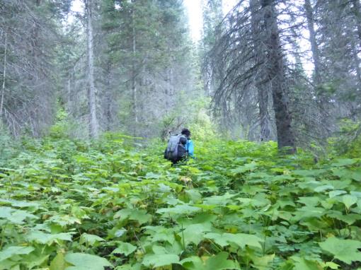 Brushy Trail along the David Thompson Heritage Trail