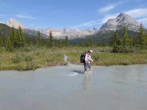 Flood Plain, Jasper National Park