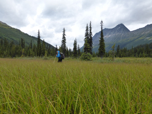 Marshy Meadows Along the Jackpine River, Willmore Wilderness