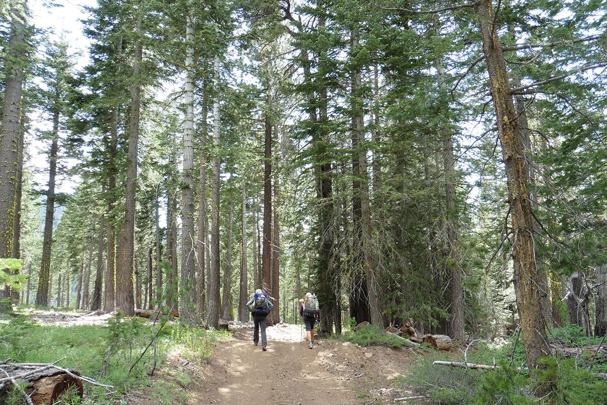 Wooded Hiking