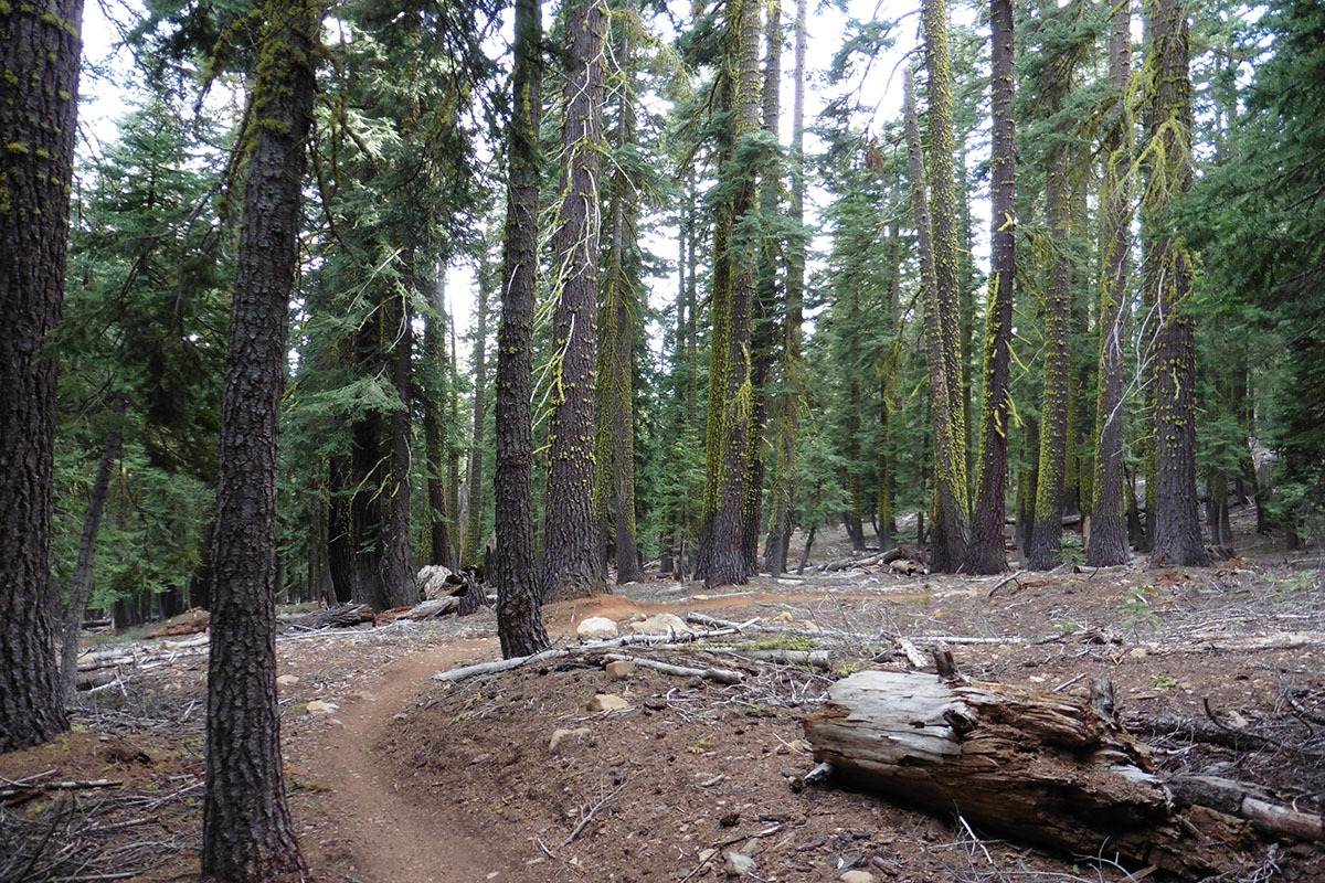 Wooded area near Tahoe City