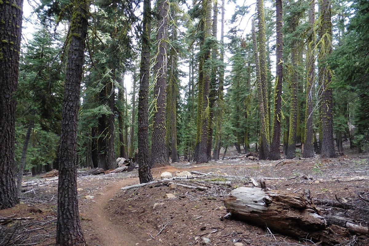 Wooded area near Tahoe City