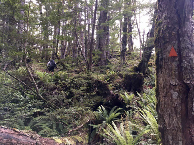 Day 115: Powering Through The Takitimu Forest